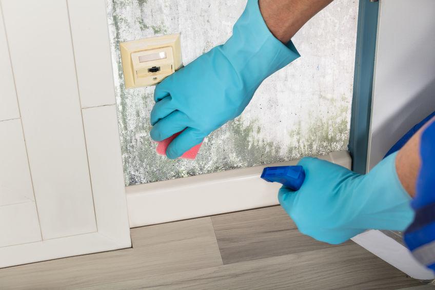 Schimmel in huis, badkamer of keuken; tips wat te doen tegen stank of verwijderen. Van rode tot zwarte schimmel na vocht in huis. - mamaliefde.nl